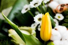 Żółty tulipan Zdjęcia Stock