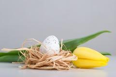 Tulipan, Easter jajko w gniazdeczku na stole Obrazy Stock