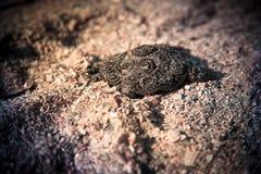 Żółw na piasku obraz stock
