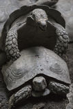 Żółwie Fotografia Royalty Free