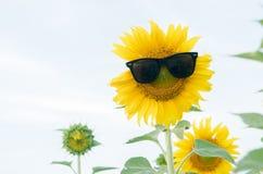 Óculos de sol bonitos do desgaste do girassol no céu branco da nuvem Imagens de Stock