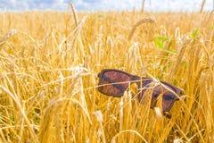 Óculos de sol em um campo de trigo Fotografia de Stock
