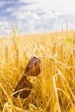 Óculos de sol em um campo de trigo Fotos de Stock Royalty Free