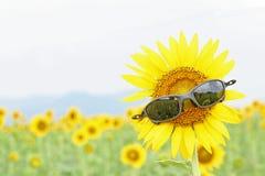Óculos de sol pretos no girassol Foto de Stock