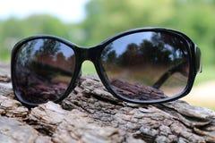 Óculos de sol que descansam no log imagens de stock