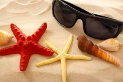 Óculos de sol, seastar e conchas do mar na areia imagem de stock royalty free