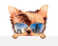 Óculos de sol vestindo do cão engraçado atrás da bandeira Imagem de Stock Royalty Free