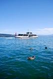 Łódkowaci buss na Szwajcarskim jeziorze fotografia royalty free