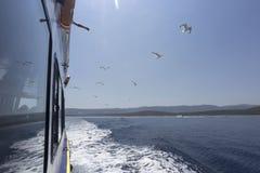 Łódkowata wycieczka w Chorwacja z ptasim karmieniem Obraz Stock