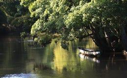 łódkowaty smok Zdjęcia Royalty Free