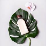 Óleo de coco e folhas e flores tropicais Conceito dos termas dos cuidados capilares imagem de stock royalty free