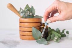 Óleo de eucalipto fotos de stock