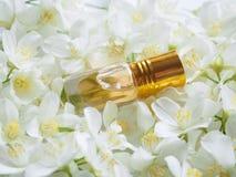 Óleo de Jasmine Attar do indiano Óleo natural da flor do jasmim para o abrandamento e a felicidade imagens de stock royalty free