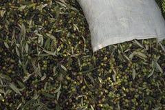 Óleo e azeitonas Cilento Campania Aquara () Oliv virgem extra Foto de Stock Royalty Free