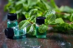 Óleo essencial da pastilha de hortelã em umas garrafas pequenas, hortelã verde fresca no fundo de madeira Fotografia de Stock