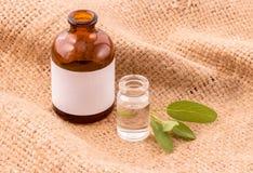 Óleo essencial do sábio natural dos ingredientes dos termas para a aromaterapia em h Imagem de Stock Royalty Free