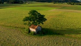 Órbita aérea sobre granero viejo con el tejado dañado, derrumbado debajo de un árbol grande en paisaje rural metrajes