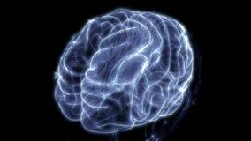 Órgão central do sistema nervoso humano Brain Anatomy ilustração do vetor