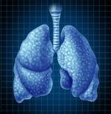 Órgão humano dos pulmões como um símbolo médico ilustração royalty free