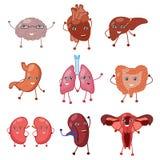 Órgãos fortes saudáveis humanos felizes de sorriso bonitos ajustados ilustração stock