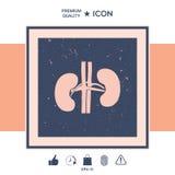 Órgãos humanos Ícone do rim Imagem de Stock