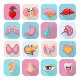 Órgãos humanos ajustados ilustração stock