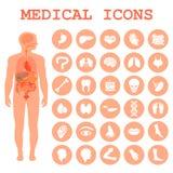 órgãos humanos, anatomia do corpo Imagens de Stock Royalty Free