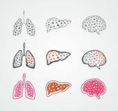 Órgãos humanos estilizados Fotos de Stock