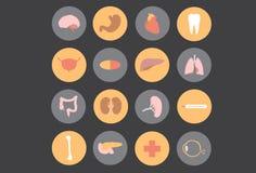 Órgãos humanos - medicina ilustração royalty free