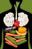 Órgãos internos humanos alinhados com vegetais Fotos de Stock Royalty Free
