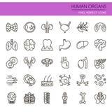 Órganos humanos stock de ilustración