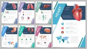 Órganos humanos internos infographic Foto de archivo libre de regalías