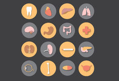 Órganos humanos - medicina stock de ilustración