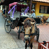 Ônibus do cavalo Fotografia de Stock Royalty Free