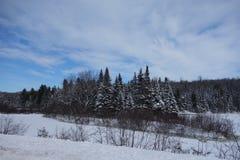 Ö av evergreen, stora norr trän, NH Royaltyfria Bilder