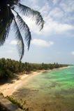 Ö för havre för leguanstrand liten Nicaragua Central America på Ca Royaltyfri Foto