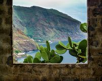 Ö för Tenerife kustkanariefågel, Spanien royaltyfria foton