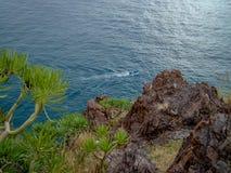 Ö för Tenerife kustkanariefågel, Spanien royaltyfri fotografi