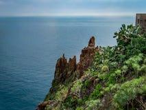 Ö för Tenerife kustkanariefågel, Spanien arkivfoto