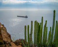 Ö för Tenerife kustkanariefågel, Spanien royaltyfri foto