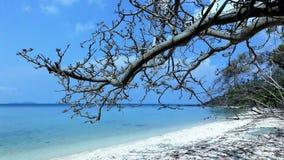 Ö hav, kust, strand, sand, träd, tropiskt som är blått, solljus, sommar, royaltyfri fotografi