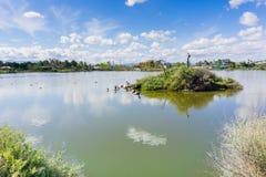 Ö i mitt av Cunningham Lake på en solig dag, San Jose, södra San Francisco Bay område, Kalifornien arkivfoto