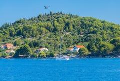 Ö med segelbåten och seagullen i luften Fotografering för Bildbyråer