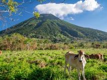 Ö Ometepe i Nicaragua Royaltyfri Foto