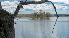 Ö på dammet bakifrån den gamla eken Arkivbilder