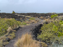 Ö Rangitoto, Nya Zeeland Arkivfoton