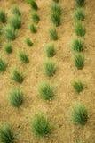 Öar av grönt gräs Arkivbilder