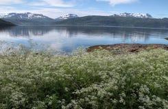 Öar av Kvaloya och Senja, Norge Royaltyfri Foto