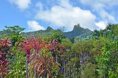 Öar för Te Manga bergRarotonga kock Royaltyfria Foton