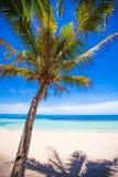 Öde ö med palmträdet på stranden Royaltyfria Foton